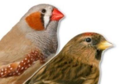 Obrázek pro kategorii Drobní ptáci