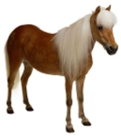 Obrázek pro kategorii Koně