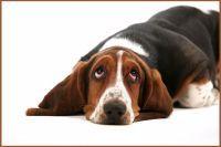 Trápí vašeho pejska bolesti kloubů?