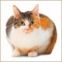 Přibírá vaše kočka na váze a nevíte si rady? Poradíme vám!