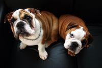 Je vhodná změna granulí u psa?