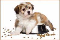 Každý pes je unikát, potřebuje tak kvalitní krmivo na míru!