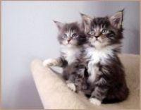 Pořizujete si koťátko? Přečtěte si, co vše budete potřebovat