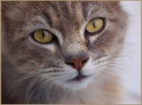 Chováte kočku? 10 věcí, které musíte znát