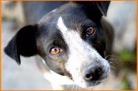 Co dělat, když pes nežere granule? Má k tomu důvod!