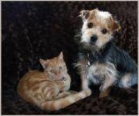 Optimanova: Špičkové krmivo pro psy a kočky s až 75% podílem kvalitního masa