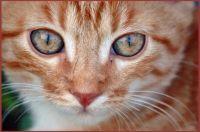 Jak správně pečovat o kočku?