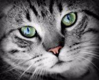 Klíč ke kočičímu trávení