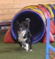 Oblíbené psí sporty