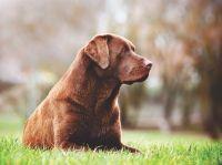 Alergie a intolerance na potravu u psů