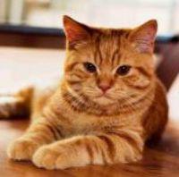 Jak na mlsnou kočku