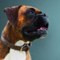Naturo proměna - projekt, který změnil život psům a jejich majitelům