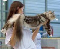 S kočkou na výstavu 1
