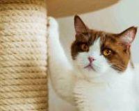 Jak vybrat škrabadlo pro kočku
