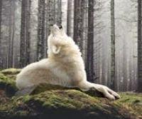 Krmení, které stvořila sama příroda - Dog & Dog - Wild