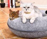 O kočičích potřebách – povídání o kočkách paní Hanou Kosteleckou Šulcovou