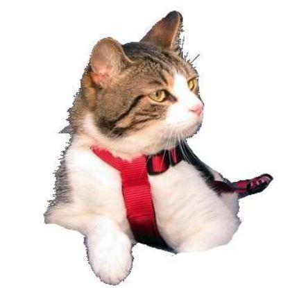 Obrázek Postroj pro kočku do auta Trixie 20-50 cm