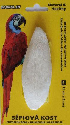 Obrázek SÉPIOVÁ kost na kartě-cca 12cm-1KS-15365