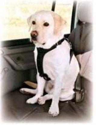 Obrázek Bezpečnostní postroj auto Trixie  L-70-90cm-4045