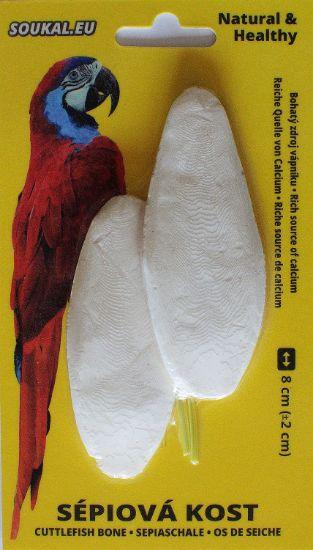 Obrázek z Sépiová kost na kartě cca 8 cm (2 ks)