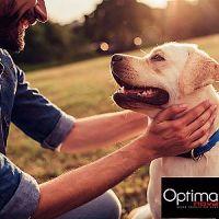 OPTIMAnova  - superprémiové krmivo pro psy a kočky