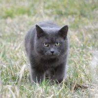 České superprémiové krmivo pro kočky IRONpet
