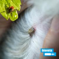 Trápí vaše domácí zvíře klíšťata? Poradíme vám, jak se jich zbavit.